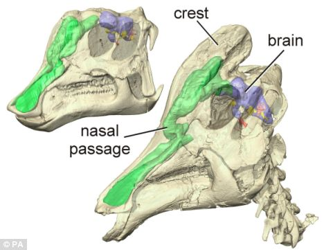 Dinosaurs used nasal passages to keep brains cool   Geology Page