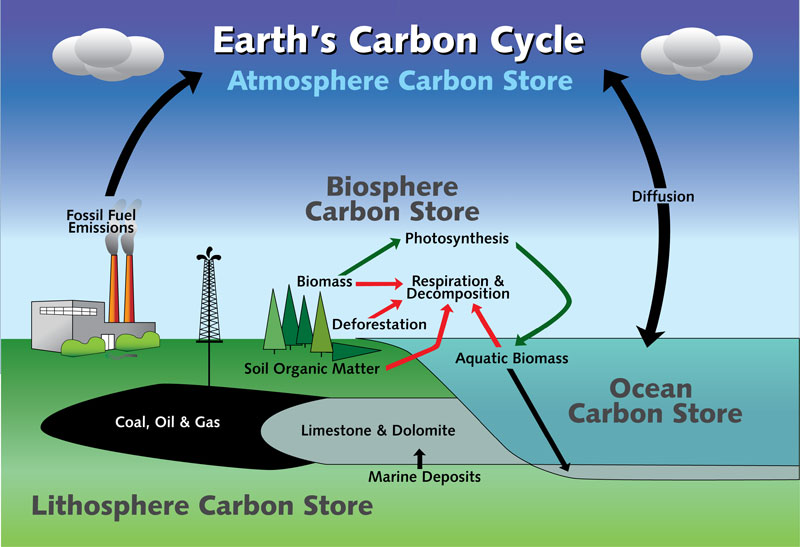 Paleoclimate researchers find connection between carbon cycles earths carbon cycle credit to nys department of environmental conservation ccuart Gallery