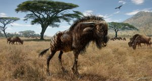 Ancient wildebeest-GeologyPage