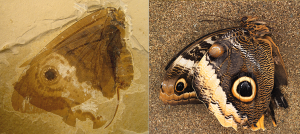 Discovery of 'Jurassic butterflies-GeologyPage