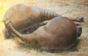 Extinct glyptodonts really-GeologyPage