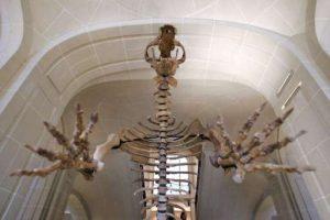 Bear bone discovery re-writes-GeologyPage