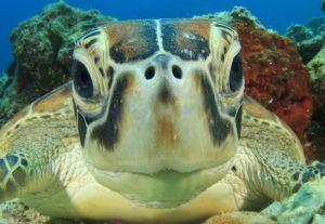 Decline of crocodile ancestors-GeologyPage