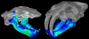 Extinct Marine Mammal-GeologyPage