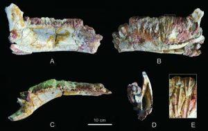 New hadrosauroid dinosaur -GeologyPage