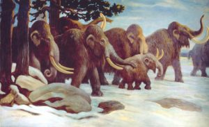 DNA proves mammoths mated-GeologyPage