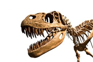 Dinosaurs 'already in decline-GeologyPage