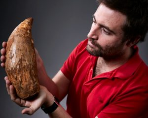 Fossilised tooth of gigantic-GeologyPage