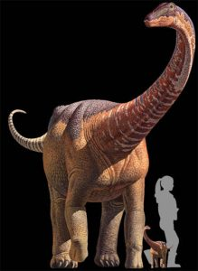 This artist rendering provided by Science,  K. Curry Rogers, M. Whitney, M. D'Emic, and B. Bagley, shows a  titanosaur, a silhouette representing the size of a hatchling titanosaur, relationship to a human at birth, tiny titanosaur babies weigh about as much as average human babies, 6 to 8 pounds. But in just a few weeks, they're shedding the tiny descriptor and are at least the size of golden retrievers, weighing 70 pounds, knee-high to a person. And by age 20 or so, they're bigger than school buses. (Science/K. Curry Rogers, M. Whitney, M. D'Emic, and B. Bagley via AP)