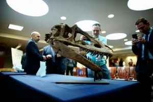 US hands over looted dinosaur-GeologyPage