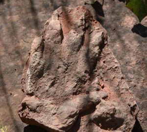 This photo made available by the Direccio General de Comunicacio del Govern of Catalonia on Monday, May 2, 2016, shows a footprint of a dinosaur discovered in early April by a person out walking in Olesa de Montserrat, 40 kilometers north of Barcelona. The government says the footprint of a dinosaur that roamed Spain 230 million years ago has been found in an excellent state of conservation in northeastern Catalonia. (Direccio General de Comunicacio del Govern of Catalonia via AP)