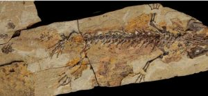 A Jurassic world of salamanders-GeologyPage