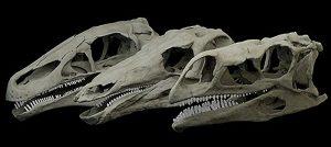 Dino jaws Stegosaurus-GeologyPage