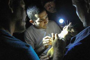 Endangered venomous mammal-GeologyPage