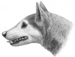 Fossil dog New species-GeologyPage