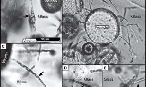 Microbes make tubular-GeologyPage