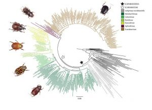 New evidence connects dung-GeologyPage