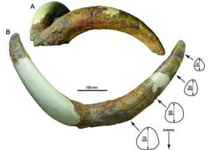 New species from the Pliocene of-GeologyPage