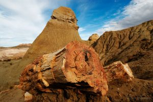 """Petrified Forest """"José Ormachea"""", Sarmiento, Province of Chubut, Patagonia, Argentina, South America"""