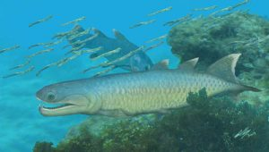 Devonian Fish Provides Unique Insights-GeologyPage