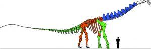 Research on massive vertebrae-GeologyPage