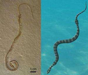 When snakes had legs New look at-GeologyPage