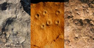 Fossils from Zaris site in Namibia: left, the discs are fossil remains of the holdfast structures that were holdfast structures for an Ediacaran species called aspidella; middle, bumps on the rock surface are the remains of burrows, called conich burrow, that were originally inhabited by anemone-like animals that may have fed on Ediacaran larvae; and,right, odd annulated and ribbon-like fossils that represent mysterious early animals (likely ecosystem engineers) called shaanxilithes. (Simon Darroch / Vanderbilt)