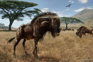 Study finds wildebeest relative-GeologyPage