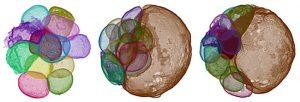 Examining embryo-like fossils-GeoloyPage