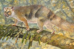 New tiny species of extinct Australian-GeologyPage