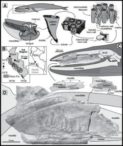 Whales in the desert-GeologyPage