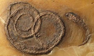 fossil-food-chain-from-the-geologypage