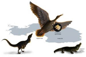 Study of the first fossil vocal organ from the Mesozoic provides insight into the evolution of bird calls and song. The fossil syrinx is from the late Cretaceous of Antarctica. Within dinosaurs there was a transition from a vocal organ present in the larynx (present in crocodiles) to one uniquely developed deep in the chest in birds. Credit: Nicole Fuller/Sayo Art for UT Austin.