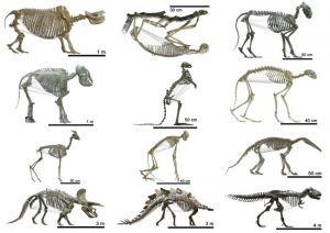 The shape of the ribcage in more than 120 tetrapods -- from prehistoric times up to the present day. Credit: UZH