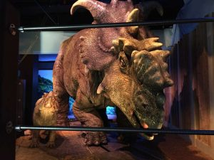 "Photo, shows a pair of pachyrhinosaurus that move around as part of the ""Jurassic World"" exhibit opening Friday, Nov. 25, at the Franklin Institute in Philadelphia. Credit: AP Photo/Josh Cornfield"