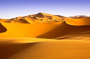 The Sahara desert was once a tropical jungle.