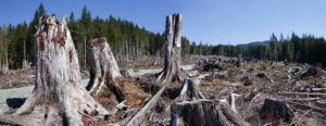 learcut logging in the Pacific Northwest