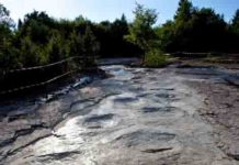 The sauropod trackway