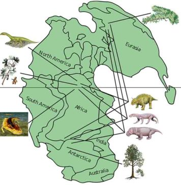 This map of Pangea shows the distribution of life during the late Permian period