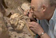 """""""Australopithecus skeleton"""" Little Foot Skull from the Sterkfontein Caves."""