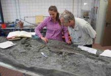 skeleton of Rhaeticosaurus