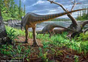 Diluvicursor pickeringi holotype