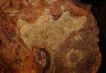 Detail view of a cast from the sandstone slab imprinted with more than 70 dinosaur and mammal tracks discovered at NASA's Goddard Space Flight Center in Greenbelt, Maryland.