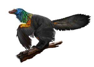 Caihong juji is a newly described, bird-like dinosaur with an iridescent, rainbow crest.
