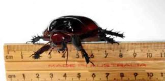 More than 100 species of cockroaches were used in the new genomic study.