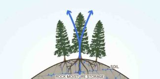 This moisture in the layer of weathered rock that is commonly located beneath soils is an important part of the water cycle on the local and global level. Tree roots tap into the rock moisture and release it back into the atmosphere as water vapor, and water flows through the fractures and becomes part of the seasonal groundwater storage (blue arrows).