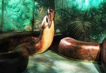 Titanoboa devouring a dyrosaurid crocodyliform, from the Smithsonian exhibit
