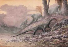 Teleocrater, an early dinosaur relative, is shown feeding on Cynognathus, while hippo-like dicynodonts look on. All of these animals lived in the mid-Triassic of Tanzania, about 240 million years ago.