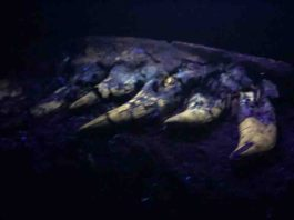 Back at the lab, the researchers found the fossil glowed under a black light