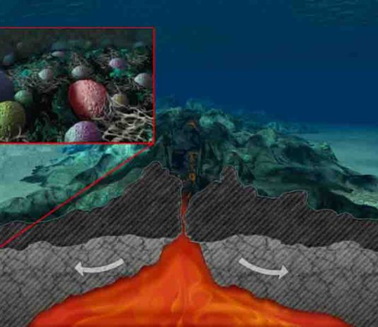 Microbes in a sub-seafloor aquifer feast on carbon in fluids flowing through the permeable rock.
